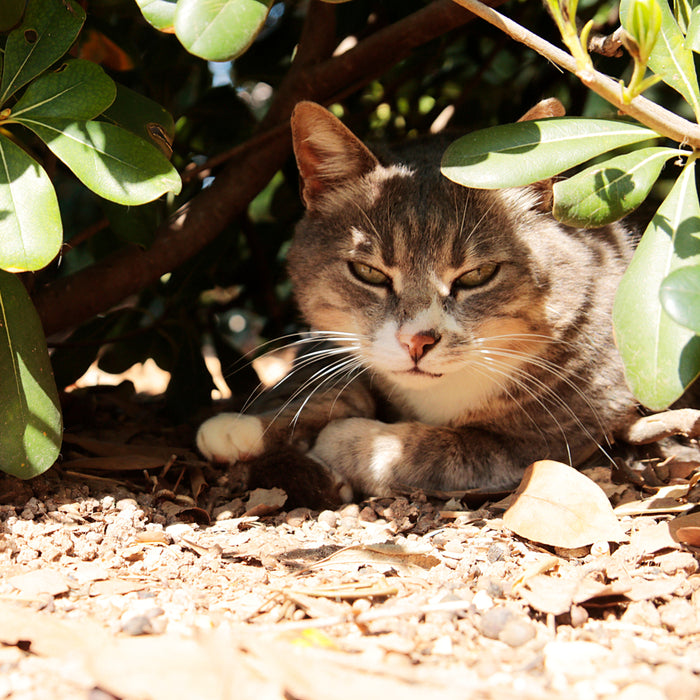 How to Keep Feral Cats Cool in the Summer