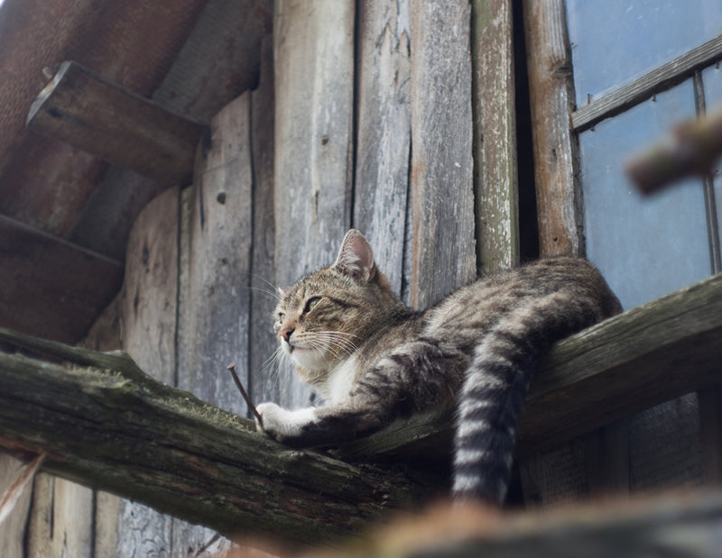 How to Raise a Barn Cat