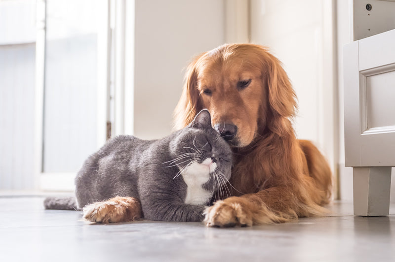 A cat and dog can become good friends if you introduce them slowly.