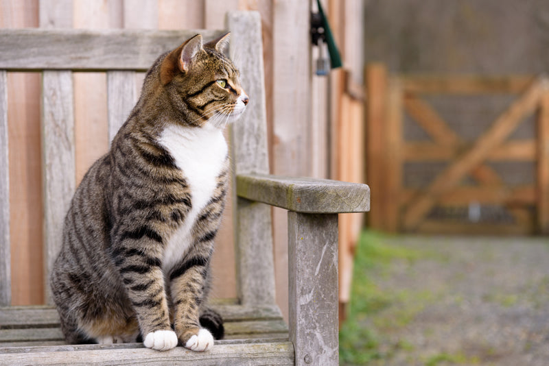 Your outdoor cat can be a happy kitty at your new home if you relocate him carefully.
