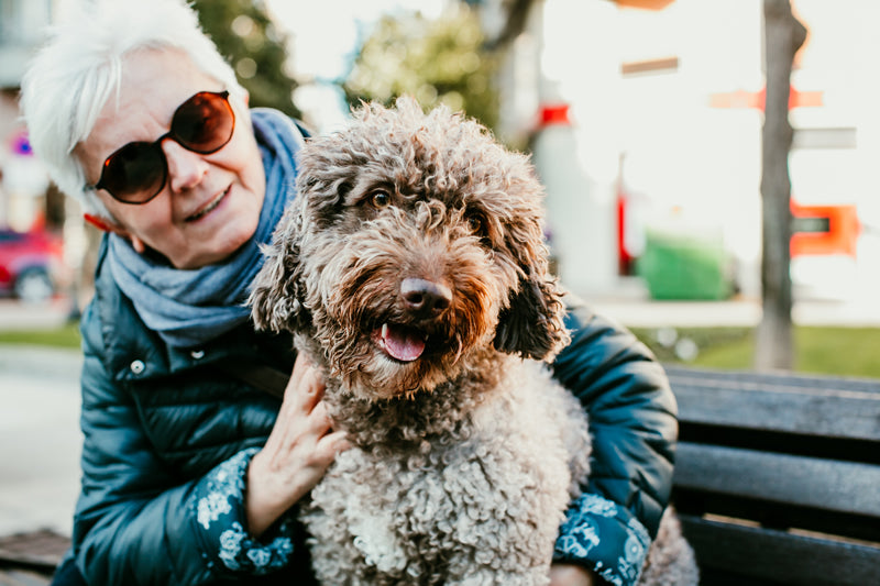 Adopting an older dog can be a real blessing to your life.