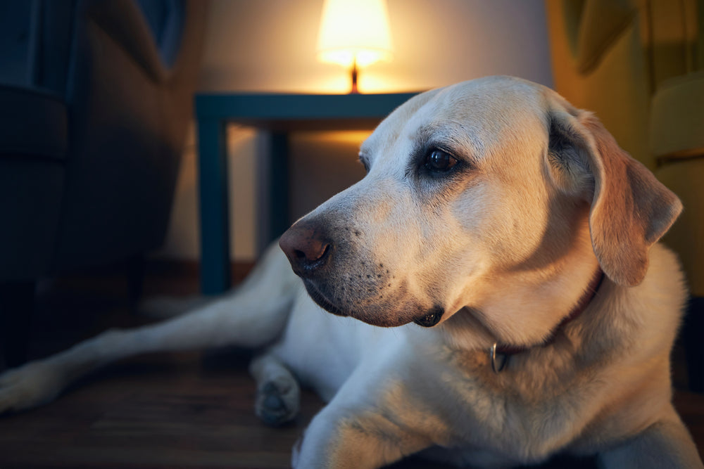 Some senior dogs struggle with anxiety during the night. Here are some ways to help.