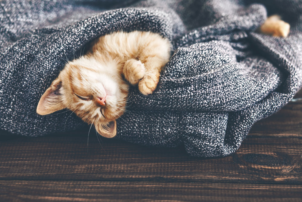Does it seem like your cat sleeps all the time? Find out how many hours a day cats sleep.
