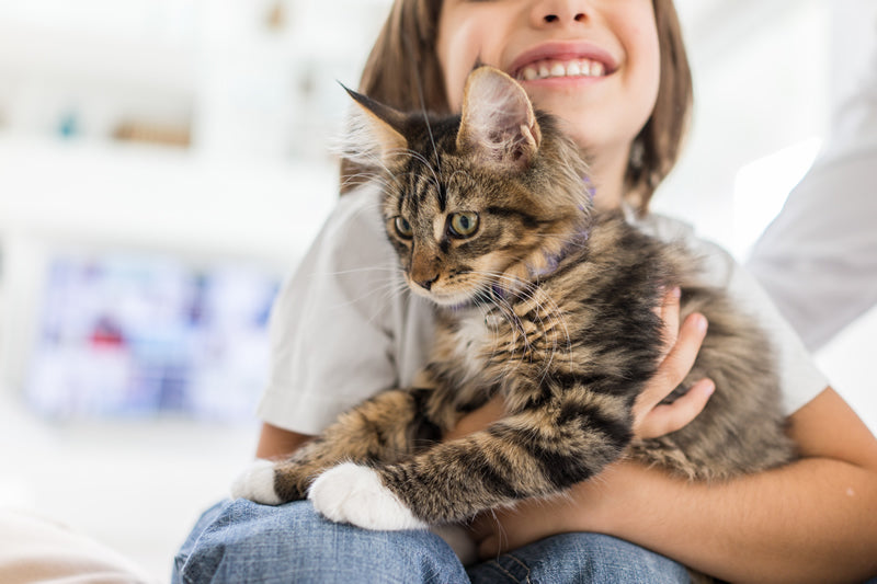 Top 10 Tips for New Cat Owners