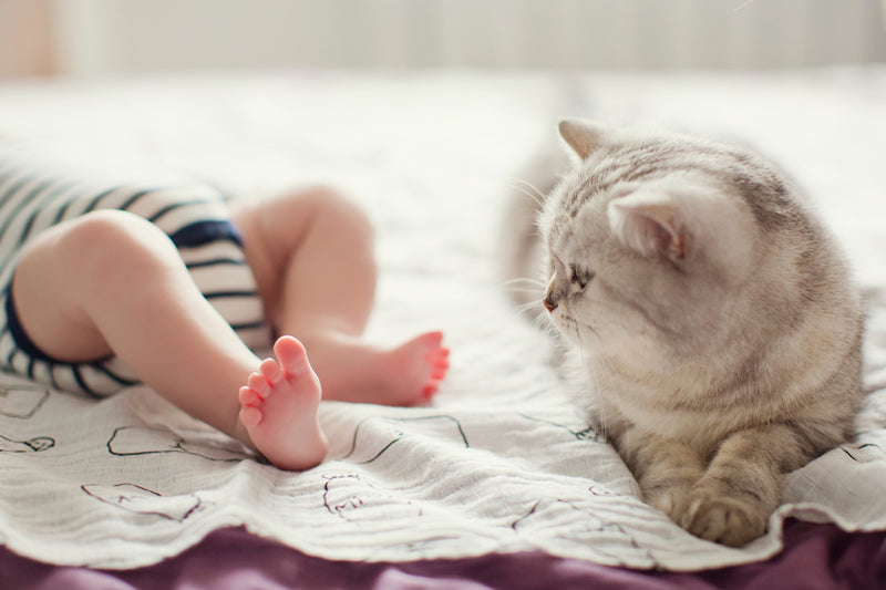 With the right introduction, your baby and your cat can be very happy together.