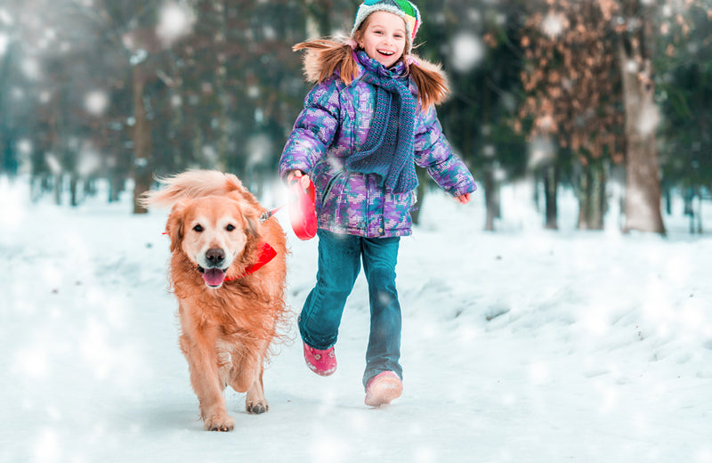 Getting a little exercise with a cold winter's hike can be a fun activity for you and your dog.