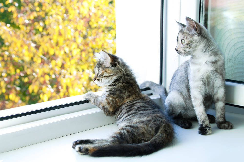 What's a Safe House Temperature for Cats in the Summer?