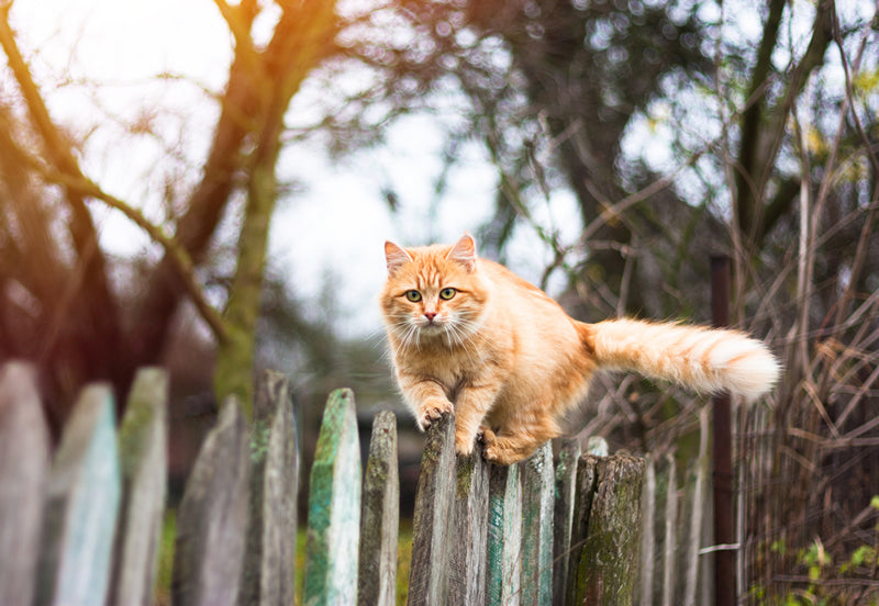 Feral and stray cats may sometimes hang out in groups or communities.