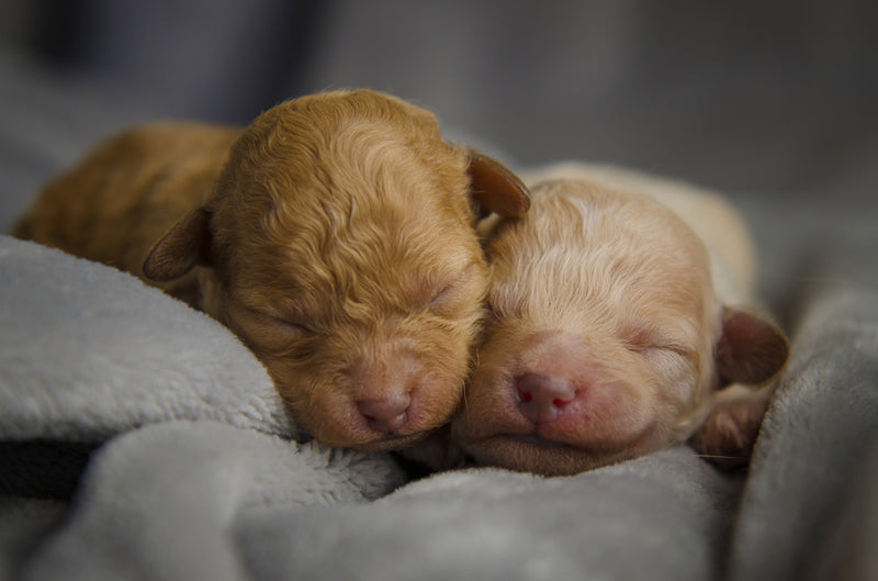 Puppies start to see around 14 days old, but their vision continues to improve over time.
