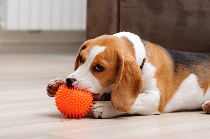 When puppies are teething, they want to chew on everything. Here's when you can expect teething to start and what you can do about it.