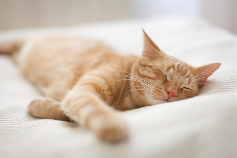 Cats look like little angels when they sleep. And sometimes they can sleep a lot.