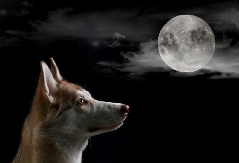 Why is my dog barking at night?