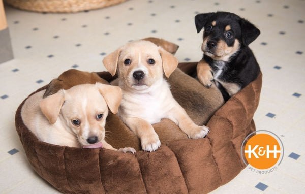 A playroom for your dog can be very beneficial to your pup.