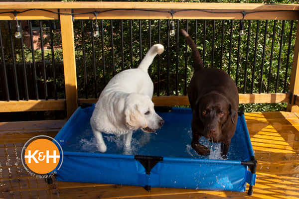 Your dog will jump for joy if you include pool time just for him in your summer adventures.