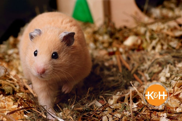 Providing the ideal air temperature is an important part of keeping your hamster warm.