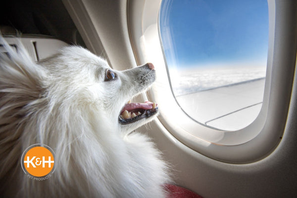Have questions about flying with your dog? Check out these tips before you board the plane with your pup.