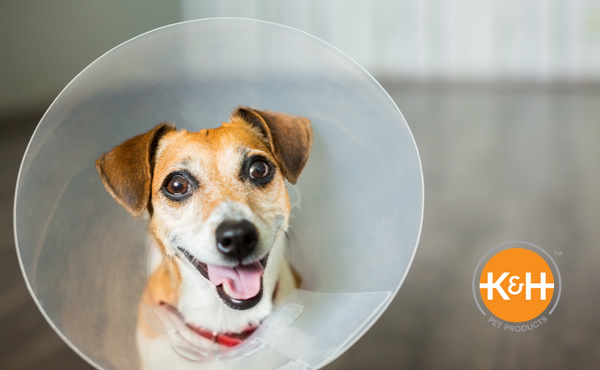 With the right tender loving care, your dog can feel happy while recovering from surgery.
