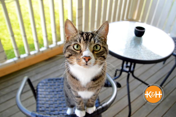 With the right furniture choices, your cat will thrive in his catio.