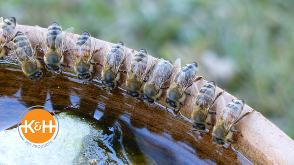 Bees need a water source in order to thrive. Learn why water is important to bees and the benefits of a bee water station.