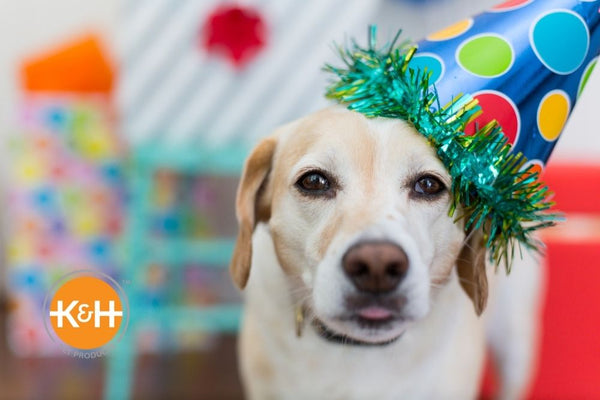 We'll help you find the perfect gift for your dog's birthday or Gotcha Day.
