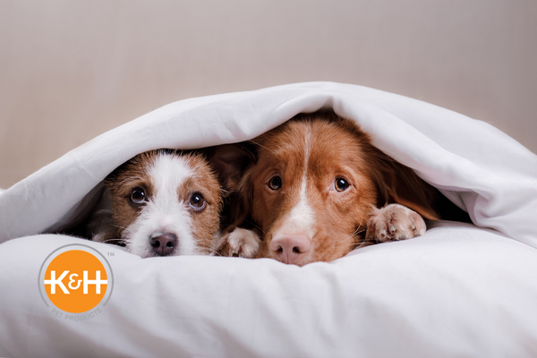 Your dog might hide and shake when fireworks are popping all around. Here's how to help him calm down.