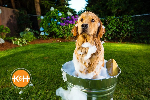 Outdoor baths can be a bonding time for you and your dog.