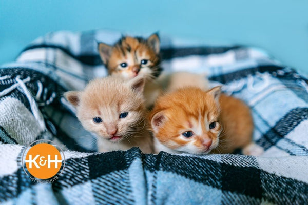 Raising a litter of kittens? Learn about how to take care of newborn kittens week by week, including what to feed them.