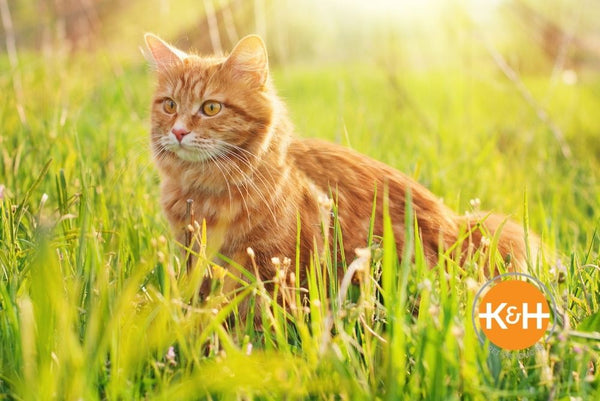 Your cat can adjust to warm temperatures more easily than you can, but you still want to be careful when it gets too hot.