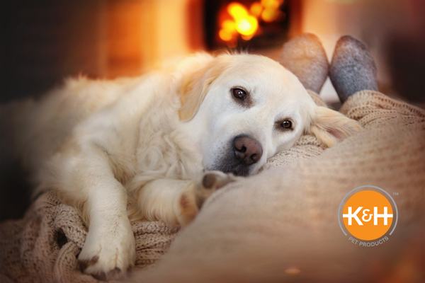 Make sure the electrical products you're using are properly safety tested for your dog.
