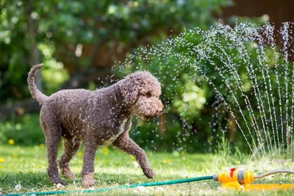 Water is a great way to help cool your dog down.