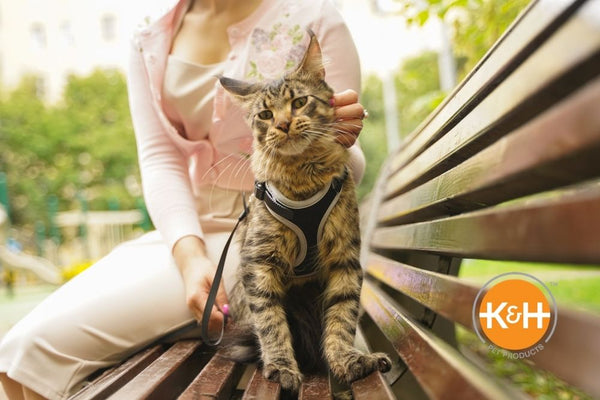 Yes, cats can be trained to walk on a leash. You need the right supplies and a little patience. Here's how to get started.