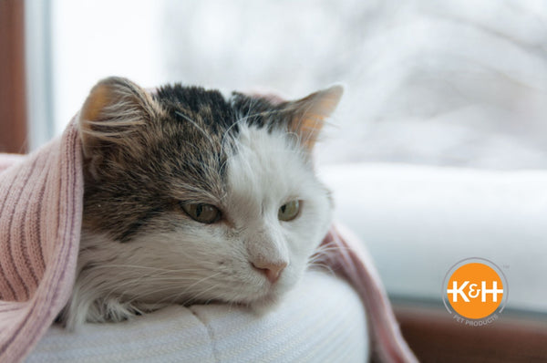 Yes, cats can get colds. The good news is they're typically mild, but you might need to talk to your veterinarian.