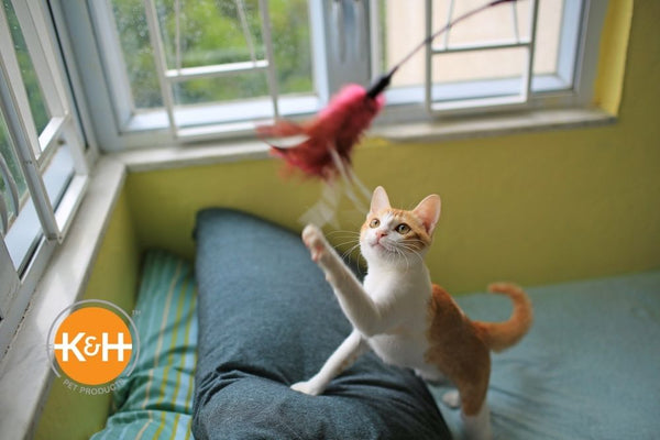 A cat playroom should be mentally stimulating and give your cat lots of options for physical exercise.