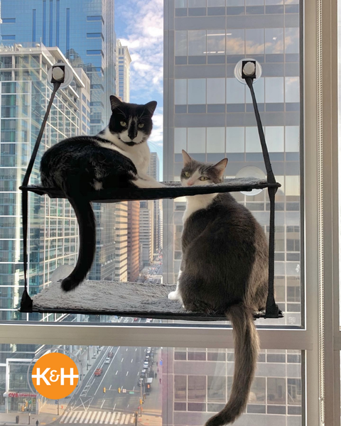 Cats love owning territory and will be delighted with any modern cat furniture solutions you find.
