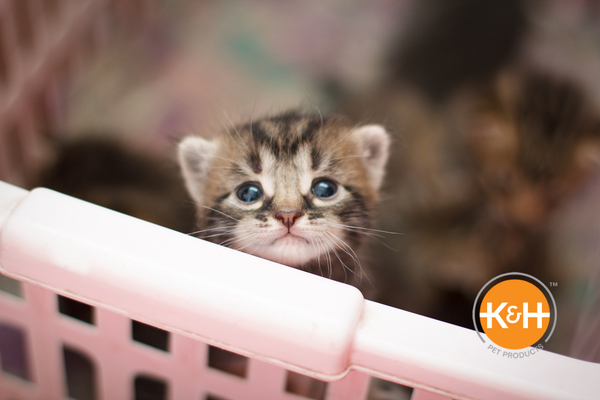 Wondering how to keep newborn kittens warm? Here are tips to help you raise a happy, healthy litter of kittens.