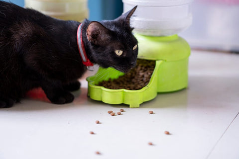 Cat eating from food dish.