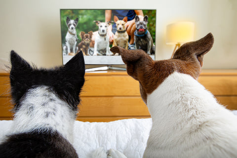 Dogs watching television.