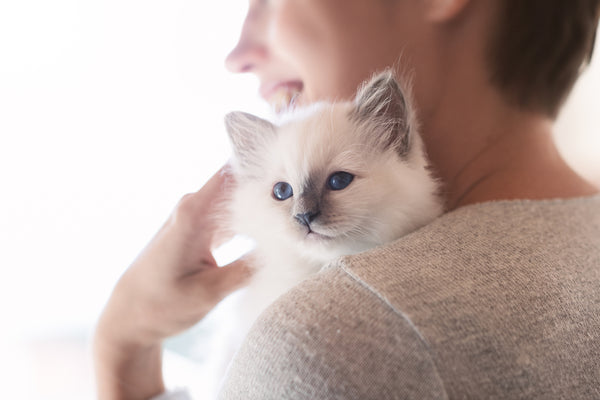 With lots of attention and handling, you can raise a cuddly kitten.