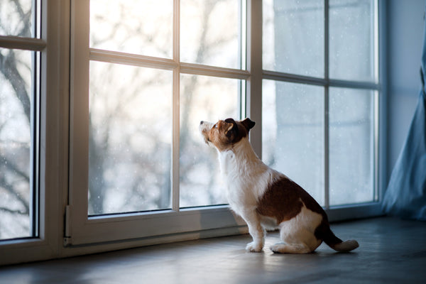Your puppy is an adorable bundle of energy, but when is he old enough to go outside?