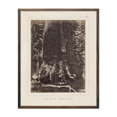Base of Grizzly Giant, Yosemite 1868