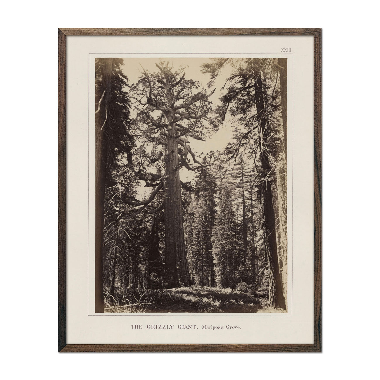 Photograph of Mariposa Grove