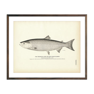 Vintage Blue Back Salmon fish print