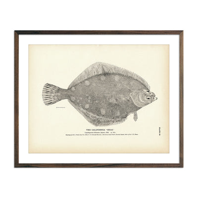 "Vintage California ""Sole"" fish print"
