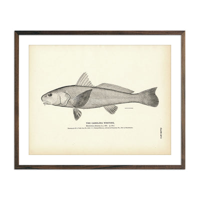 Vintage Carolina Whiting fish print