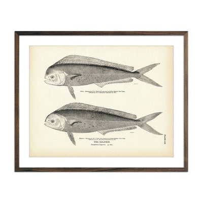 Vintage Dolphin fish print