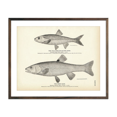 Vintage Fall-Fish and Horn Dace fish print