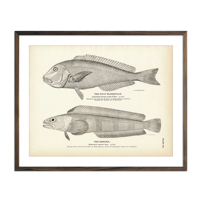 Vintage Gulf Blanquillo and Ronchil fish print