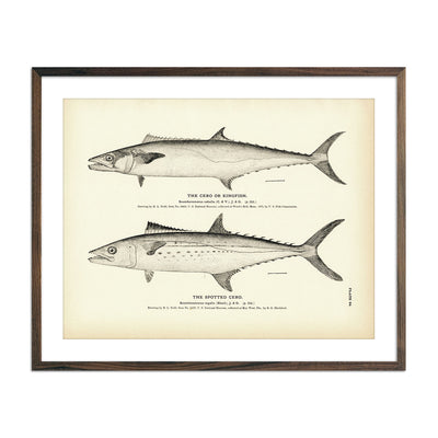 Vintage Cero and Spotted Cero fish print