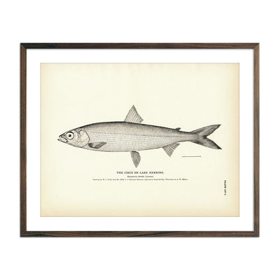 Vintage Cisco fish print