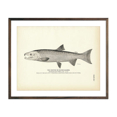 Vintage Kisutch fish print